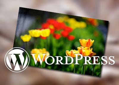 为WordPress主题添加特色图像功能 1